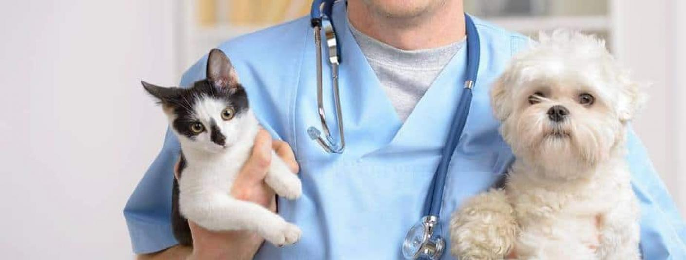 hospital veterinario sierra de madrid